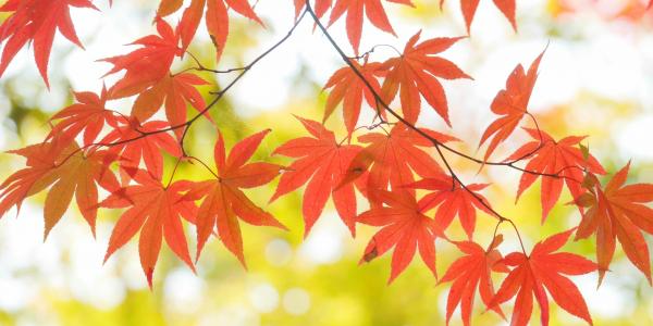 DMの反響率を上げる秋の挨拶例文